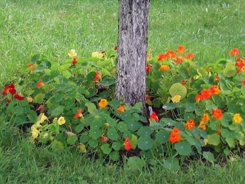 Что посадить под деревьями в саду