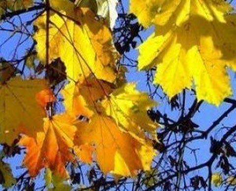 25 сентября – День Артамона: Приметы и суеверия