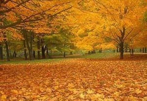 16 октября – Денис Позимний: приметы и суеверия