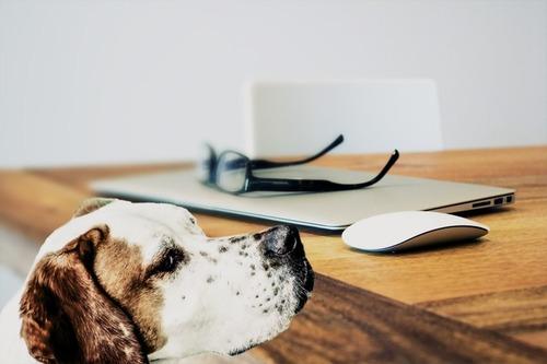 Теперь дают оплачиваемый отпуск по уходу за… собакой