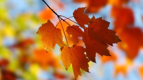 19 октября – День Фомы, День Дениса: приметы и суеверия