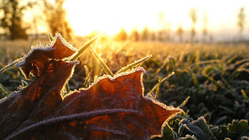 20 октября – день Сергея Зимнего: приметы и суеверия
