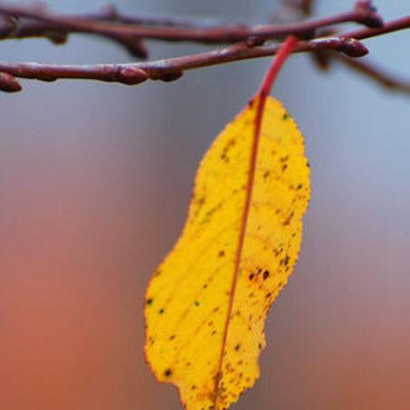 25 октября – День Прова, День Андрея: приметы и суеверия