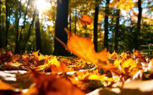 27 октября – День Прасковьи: Приметы и суеверия