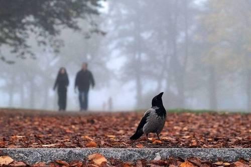 28 октября – Смотрины Льна, Ефим Благочестивый: Приметы и суеверия