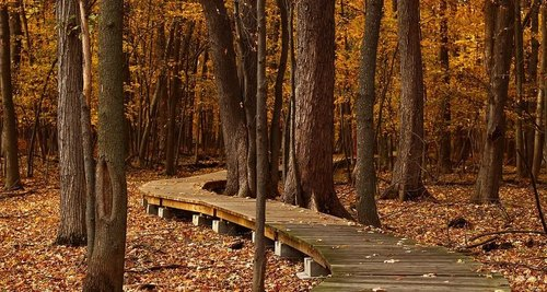 Жизнь рядом с лесом положительно влияет на мозг