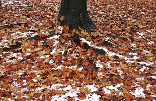 10 ноября – день Параскевы, день Макоши