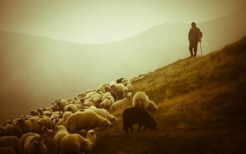 11 ноября – День Аврамия Овчара и Анастасии Овечницы: Приметы и суеверия