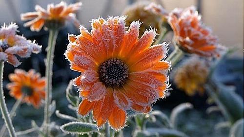 16 ноября – День Агапии, День Анны Холодной: приметы и суеверия