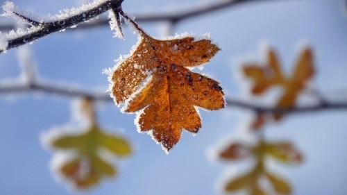 3 декабря – день Прокла: приметы и суеверия