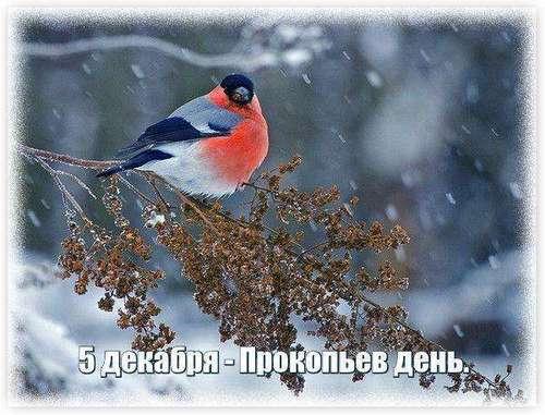 5 декабря – день Прокопа: приметы и суеверия
