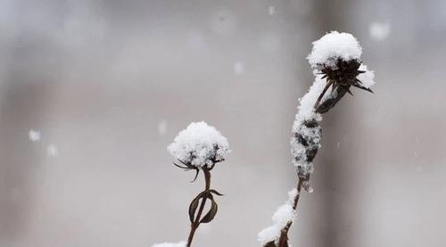 Посевы под зиму без ошибок