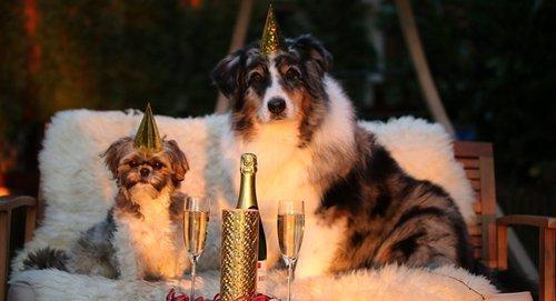 В чем встретить Новый год Желтой Собаки