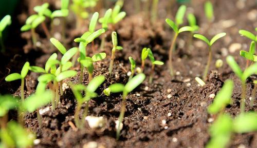 Секреты быстрого проращивания семян