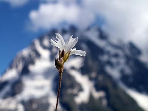 Новогодняя притча о белом цветке