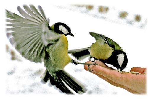 Притча к Рождеству: «Человек и птицы»