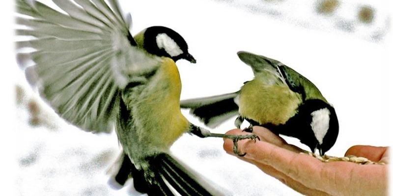 Притча к Рождеству: «Человек и птицы» - Новости Спектр