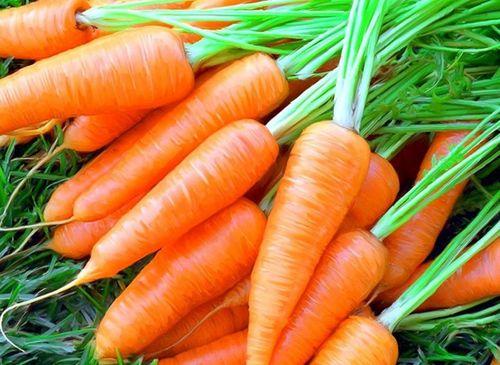 Морковь: основные тонкости выращивания