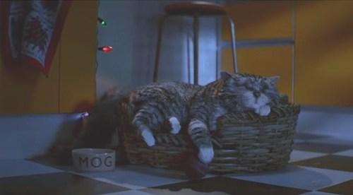 Рождественский фильм про кота (ВИДЕО)