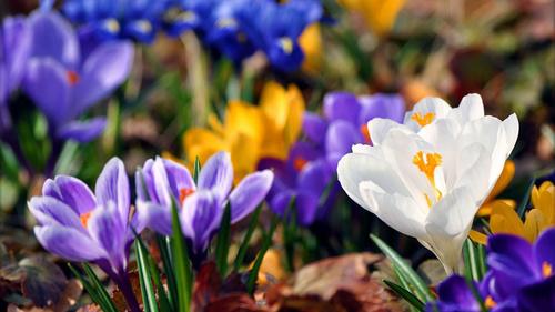 Какие цветы посадить на клумбе в саду весной