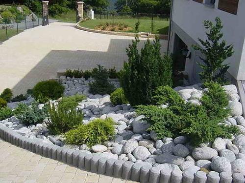 Хвойные растения в дизайне сада и уход за ними
