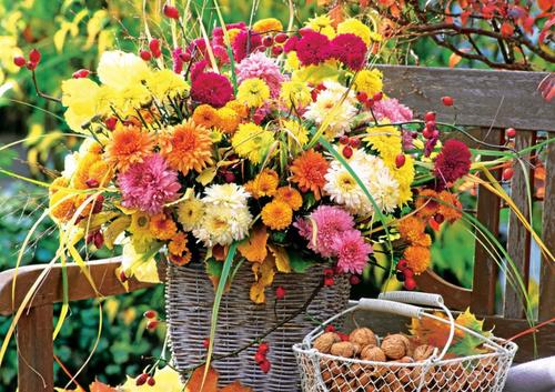 Хризантемы: выращивание осенних красавиц