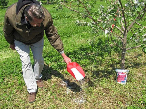 Чем подкармливать деревья и кустарники весной