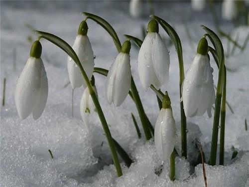 18 марта – День Конона-градаря, Огородника, Покровителя посевов: приметы и суеверия