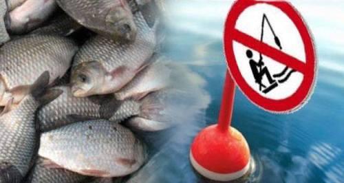 С 1 апреля до 21 мая в Харьковской области будет запрещен лов рыбы