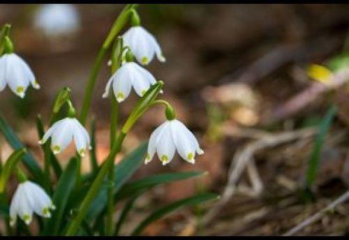 26 марта – День Никифора: Приметы и суеверия