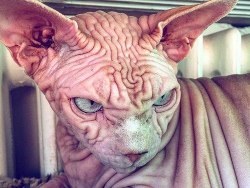 Да это же кот самого доктора Зло!