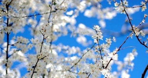 16 апреля – День Никиты, День Гафии: Приметы и суеверия