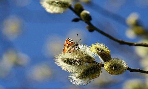 19 апреля – Евтихий тихий и Ерема Пролетный: Приметы и суеверия