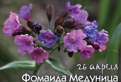 26 апреля – Заячьи именины, Фомаида, Медуница: Приметы и суеверия