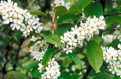 4 мая – День Прокла: Приметы и суеверия