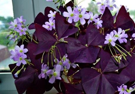 Комнатные растения, приносящие счастье, удачу, любовь и богатство
