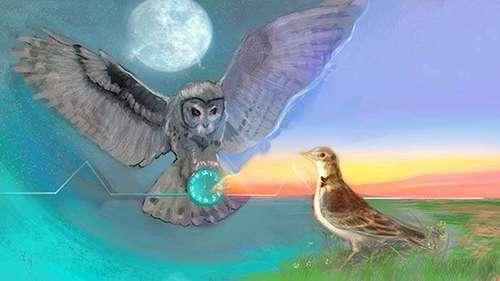 Почему «совы» лучше «жаворонков»