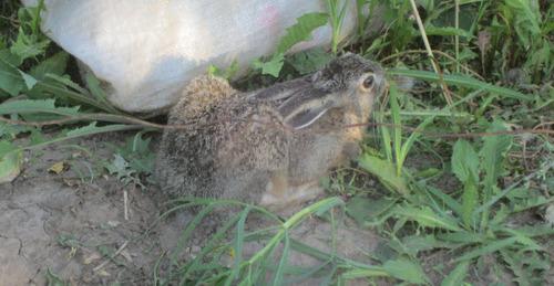 Как отпугнуть зайцев от дачного участка