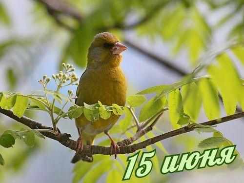 15 июня – Вьюн зеленый, день Никифора: Приметы и суеверия