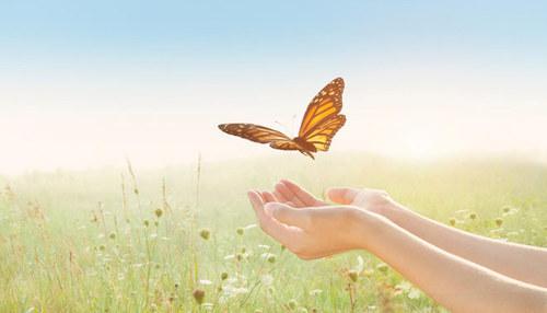Бабочки при перелетах используют ветер