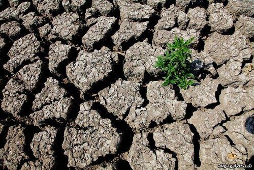 Летняя жара. Спасаем урожай