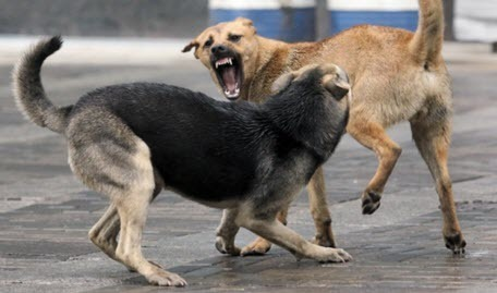 Злые собаки умирают раньше