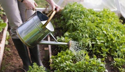 Основные ошибки при поливе огорода