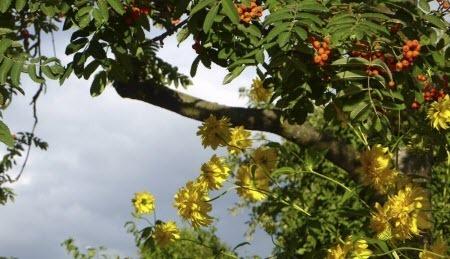 3 августа – День Онисима. День Семена-Летопроводца: Приметы и суеверия