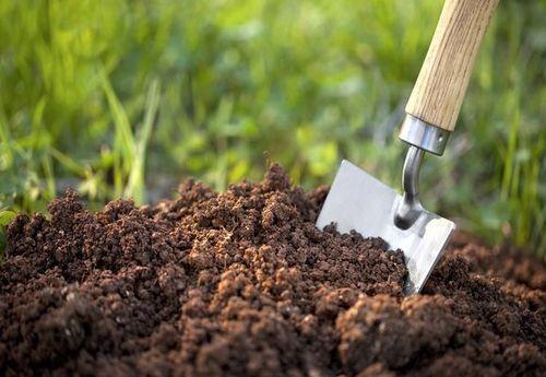 Здоровье дачного участка - Почва тоже болеет