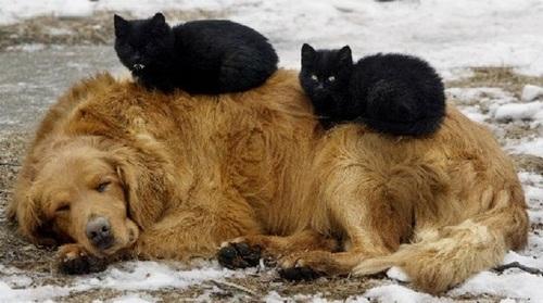 Не будите спящую собаку