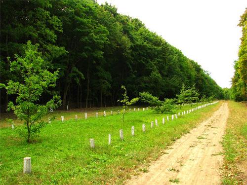 Достопримечательности Украины: Кочубеевские дубы