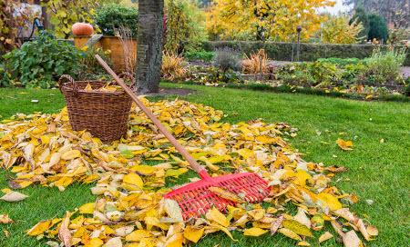 Несколько полезных советов садоводу на сентябрь