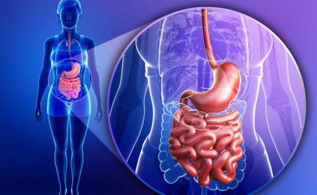 Мозг человека напрямую связан с желудком