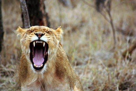 Как ведут себя разные знаки Зодиака в гневе